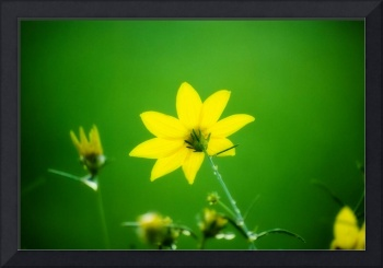 Yellow on Green Flower