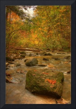 Stream In Autumn, Rock Glen Conservation Area, Ont