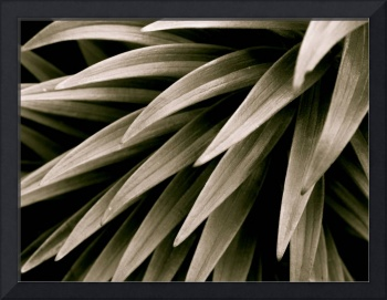 Oriental Lily Leaves
