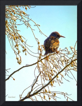 Bird on a Winter Branch