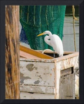 Egret, Boat, and Net