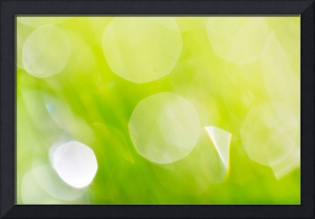 Green Abstract - Dewdrops in the Sunlit Grass