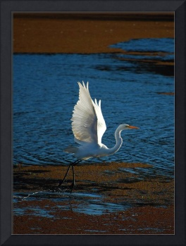 Backlit Egret