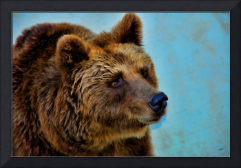 Brown Bear 203