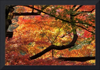 Colours of the Fall