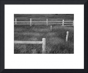White_Fence_BW_F