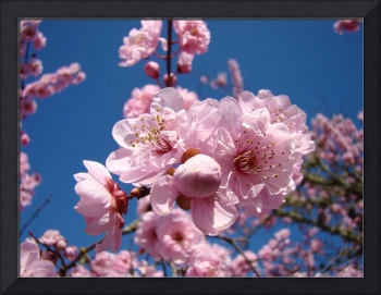 Floral Spring art Pink Flower Blossoms Trees