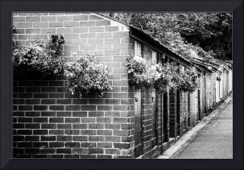 Outhouses All in a Row - Black and White