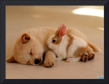 Bunny Rabbit Sleeps With Tired Puppy