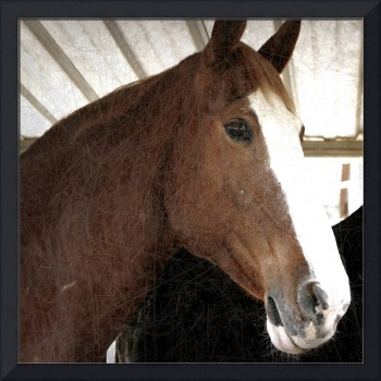 Elegant brown horse I
