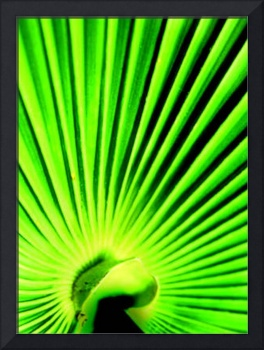 Vibrant Green Palm Leaf