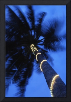 Palm Tree With Fairy Lights, Blurred Motion Tanza