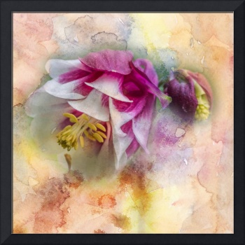 Columbine Watercolor Texture Square