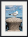 Seagull On A Post by Rich Kaminsky