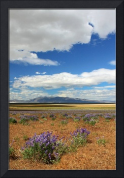 Lupines In Honey Lake Valley