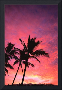 Palm Trees Silhouetted By Sunset, Pink And Purple