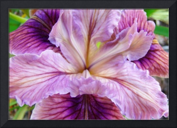 Iris Flower Purple Irises Floral art prints