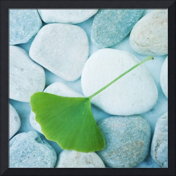 Stones and a gingko leaf