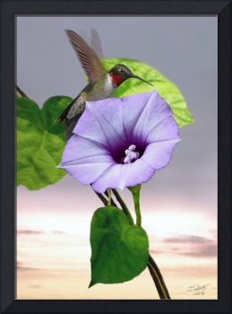 Morning Glory and Hummingbird
