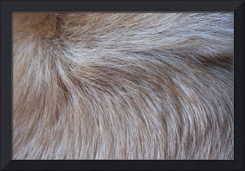 Dog Fur Whorl