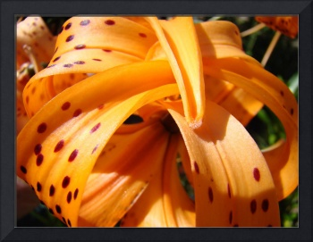 OFFICE ART Tiger Lily Flower Floral Art Prints