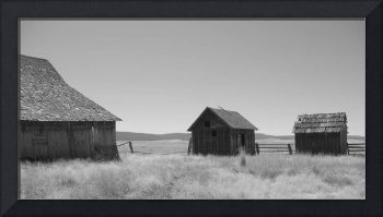 Black and White Barns