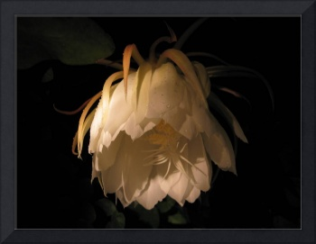 Flower of the night 02
