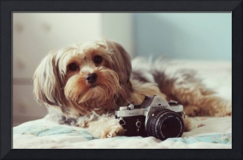 Cute White Terrier Puppy Takes A Camera Snapshot
