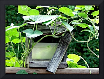 birdhouse with morning glory growing through it 2