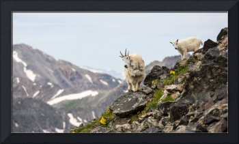 Momma and Baby Mountain Goats