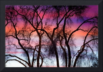 Colorful Silhouetted Trees 9