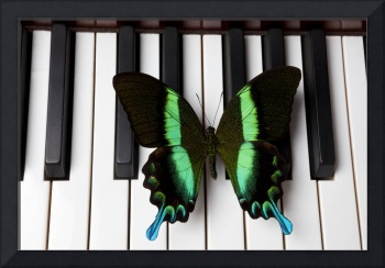 Green and black butterfly on piano keys