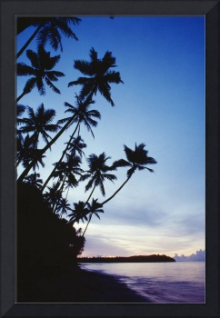 Fiji, Palm Trees Line The Beach At Twilight