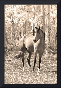 Beautiful Horse Sepia Portrait