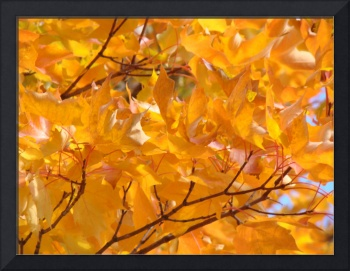 Golden Orange Autumn Leaves Fall Trees art prints