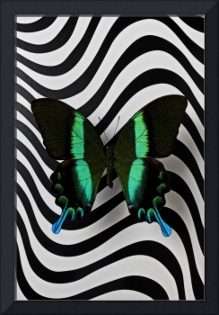 Green and black butterfly on wavy lines