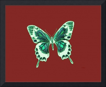 Green Off White Butterfly Burnt Orange Background