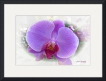 ORCHIDS gallery