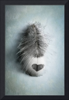 Love Feather