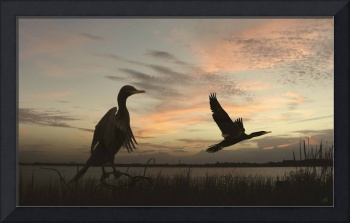 Cormorants at Sunrise