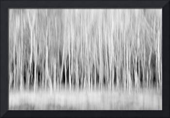 Forest Trees Abstract in Black and White