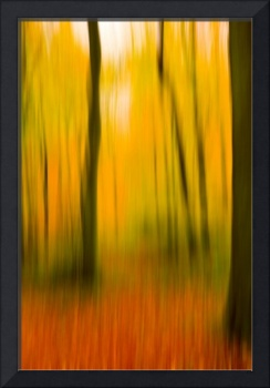 Beech wood in Autumn I