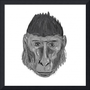 Crested Black Macaque Head Drawing