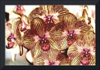 Detail Drawing  of Yellow Red Orchids