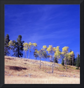 aspens on hill