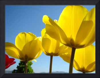 TULIPS Spring Yellow Tulip Flowers Floral Art