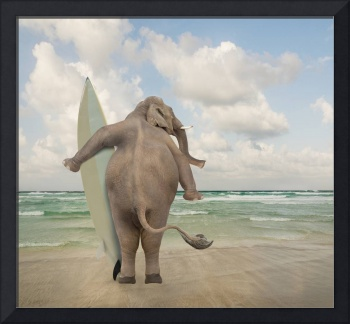 Surfer-Elephant-Seeking-Big-Waves
