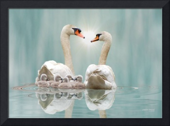 Swan Family Reflectiion by Robin Amaral