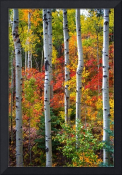 Leaves Of Autumn by David Halpern