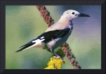 Clark's Nutcracker - Oil